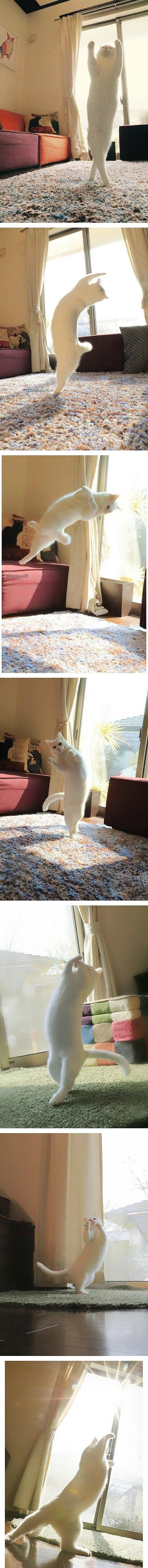 고양이로 환생한 발레리나-1.jpg